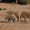 Elephants drinking water.  This used to be a river, but is now dried.
