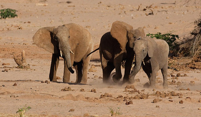It has been a dry year.  There was no water at this river bed at Samburu!  The elephants were fighting to drink from a water hole.