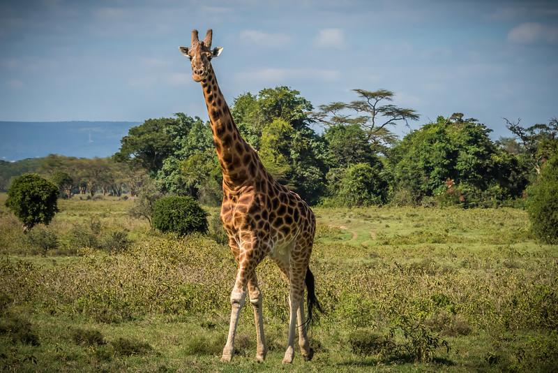 076_2014_Kenya_Safari_1--41452