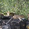 082_2014_Kenya_Safari_1--41534