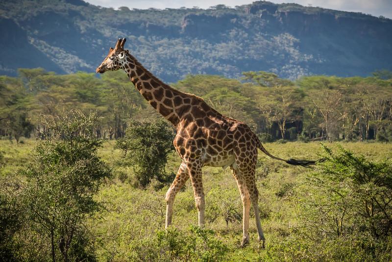 080_2014_Kenya_Safari_1--41503