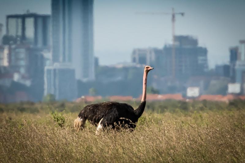 004_2014_Safari_Nairobi_Nat_Park-46213