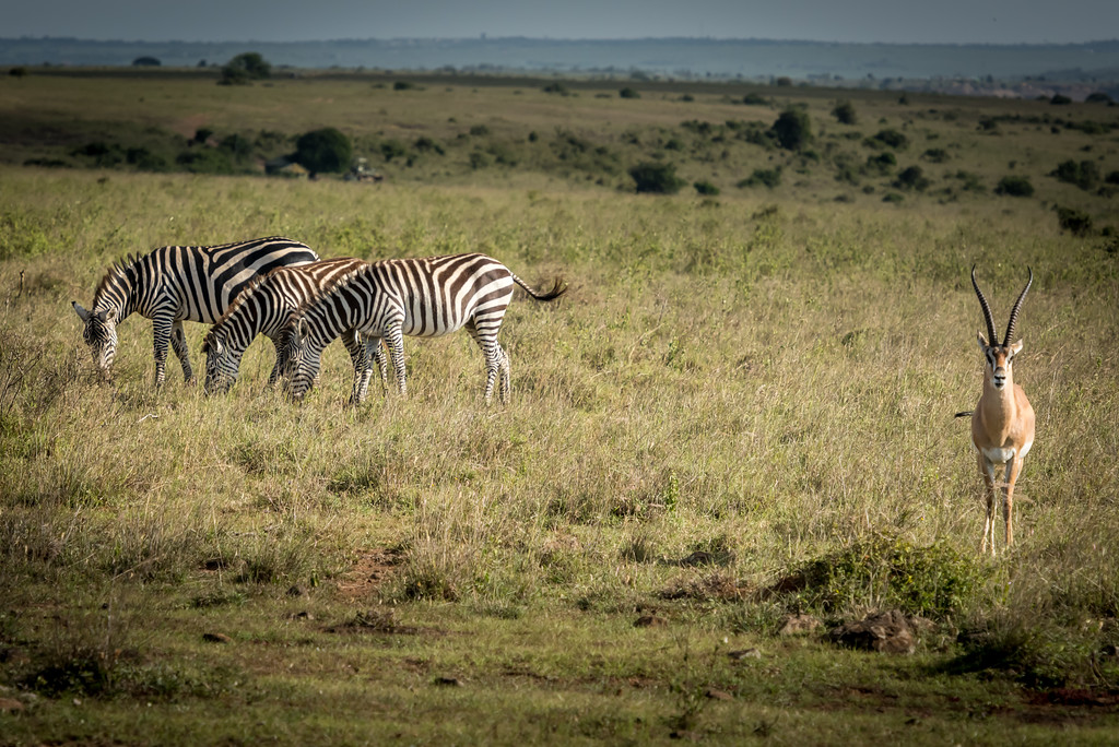 008_2014_Safari_Nairobi_Nat_Park-46264