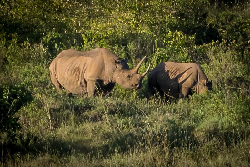 011_2014_Safari_Nairobi_Nat_Park-46466