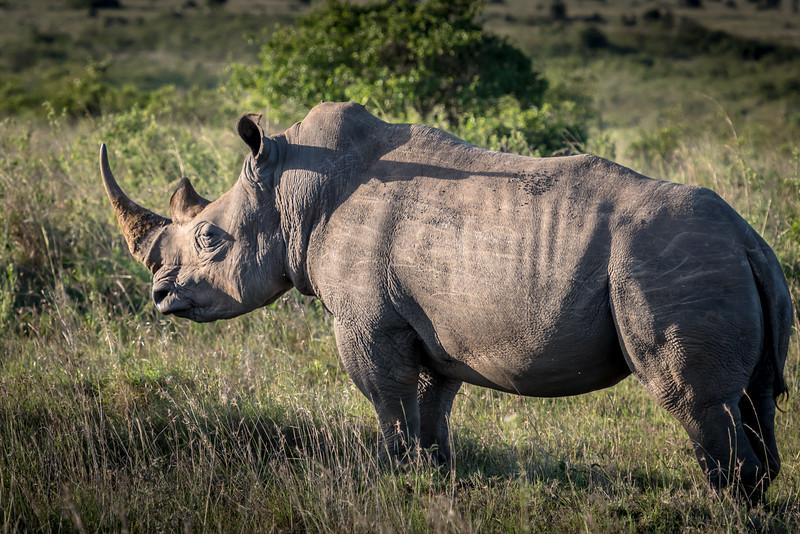 013_2014_Safari_Nairobi_Nat_Park-46484