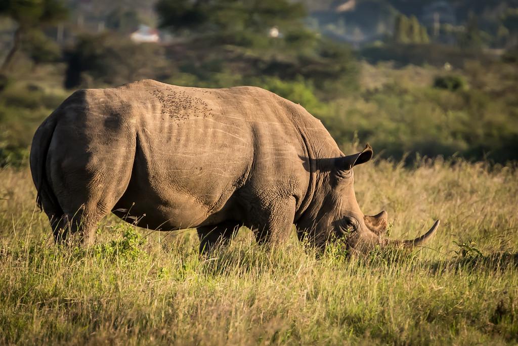 012_2014_Safari_Nairobi_Nat_Park-46538