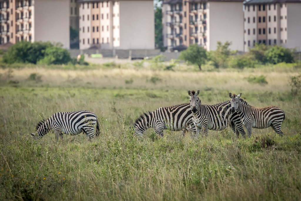 001_2014_Safari_Nairobi_Nat_Park-46167