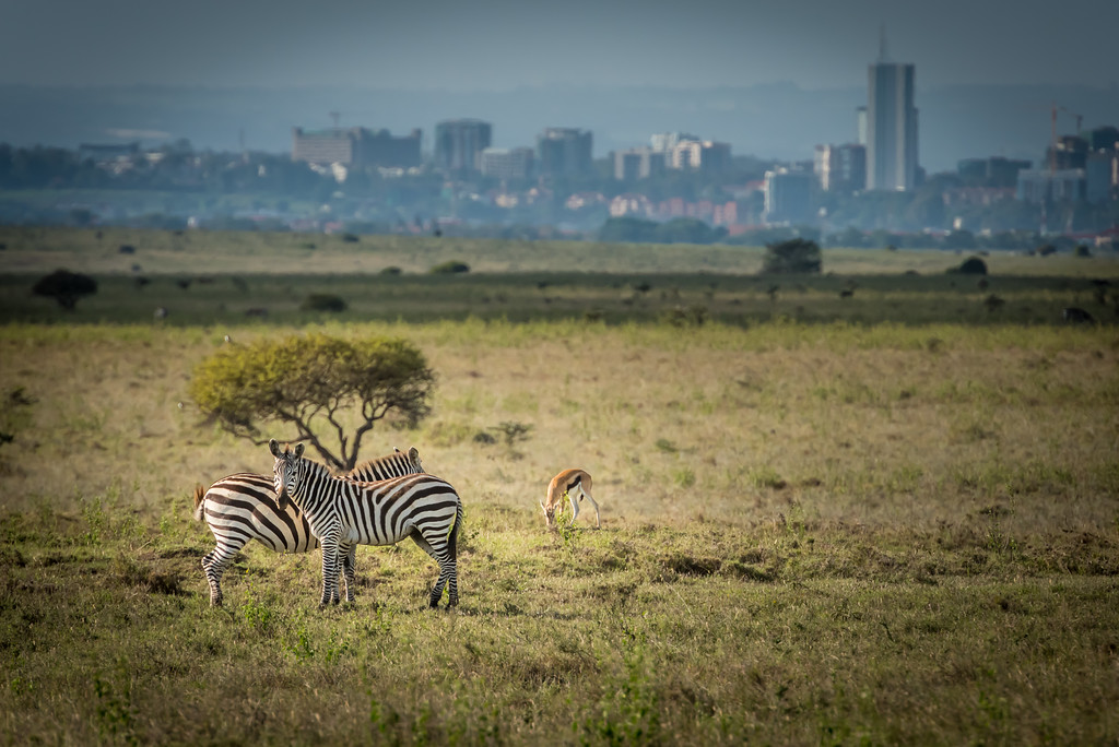 015_2014_Safari_Nairobi_Nat_Park-46314