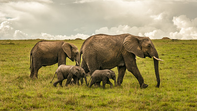 Elephant family with two babies