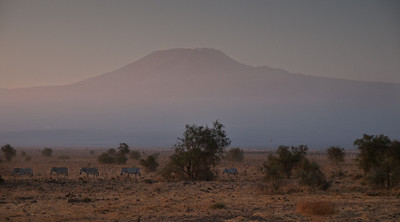 Zebras in front of Mt Kilimanjaro at dusk.