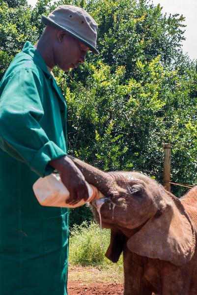 David Sheldrick Wildlife Trust and Elephant Orphanage.