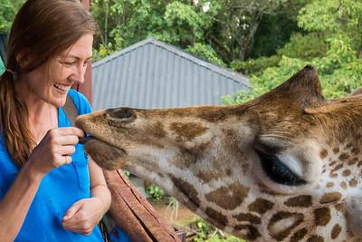 The Giraffe Center in Nairobi