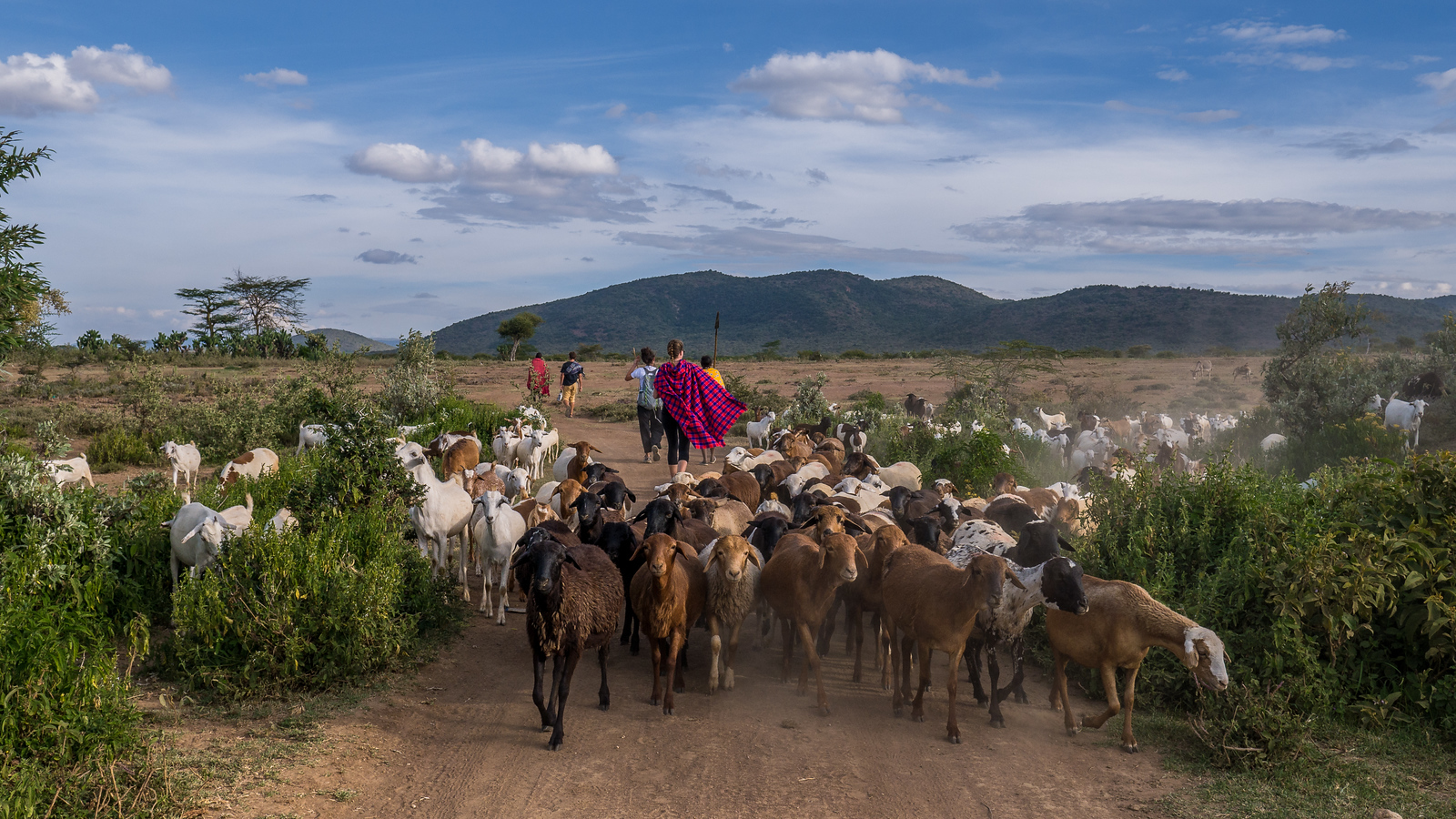 Walking the Maasai Mara in search of our camping spot for the night — we hit a goat traffic jam.