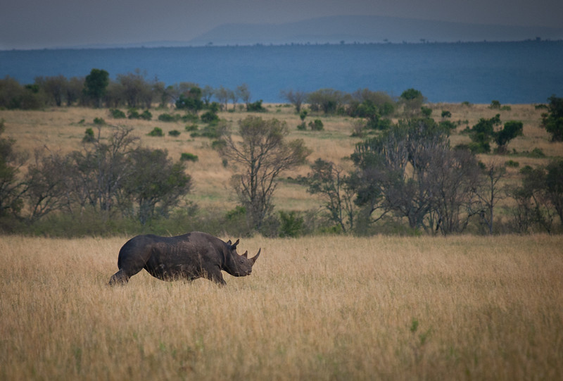Our first black rhino!  One of the 4 that we saw in Africa.