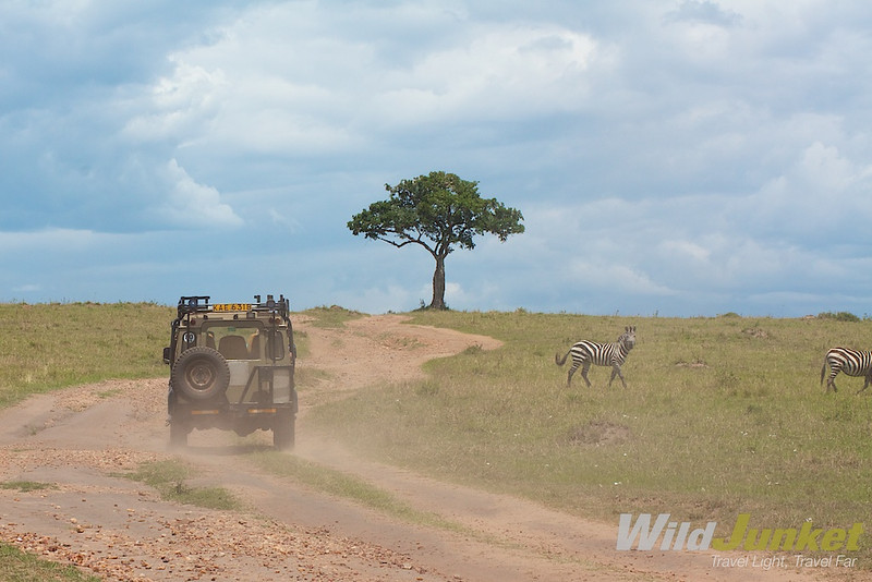 A safari jeep thundering through Masai Mara