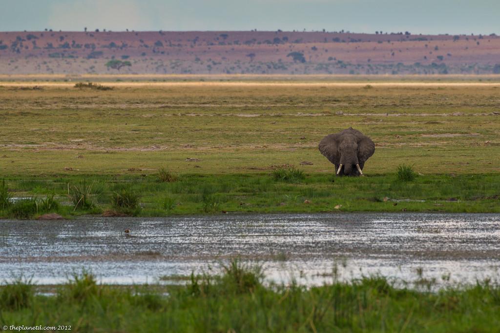 Amboseli Elephants Kenya