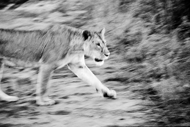 Another image resurrected from our archive, taken using a Canon film SLR in Kenya 2004