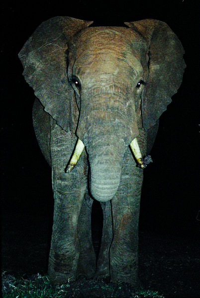 In a underground hide we realise the enormity of the african elephant