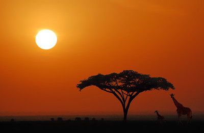 African Morning