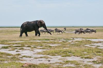 Elephant and Wildebeest