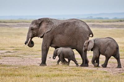 Elephant Famly