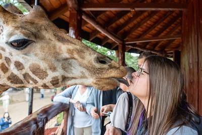Kissing at giraffe at the Giraffe Centre
