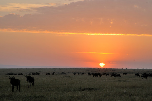 Sunrise on the Mara.