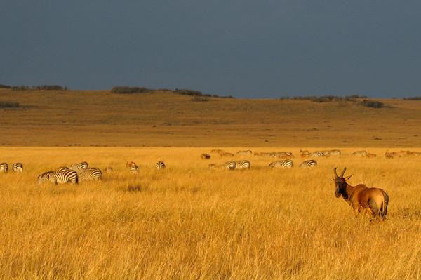 Masai Mara.