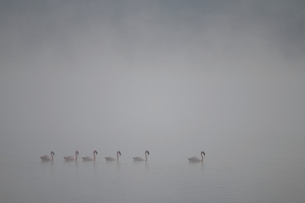 Flamingos early morning on Lake Nakuru.