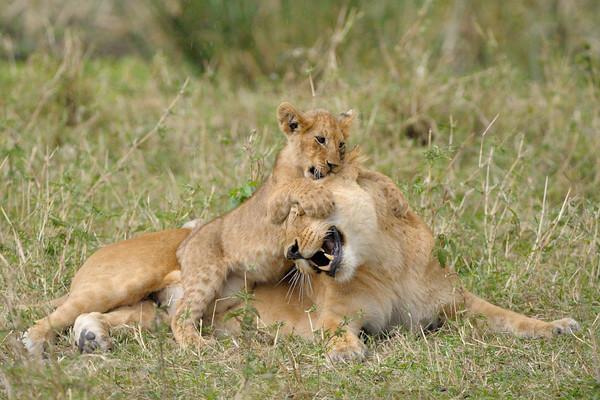 Musiara Marsh, Masai Mara.