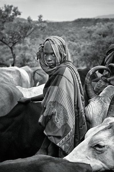 Young Surma pastoralist with cattle, morning. SNNPR, Ethiopia