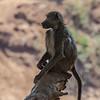 The baboons kept us company,