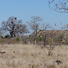 The tree at the left rear was our first baobab; such dry country.