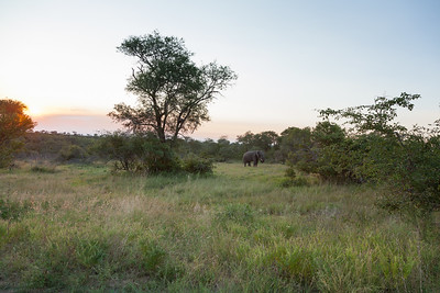 The second of the big five, a beautiful elephant in the distance.
