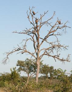 Vultures, witnesses of some animal crime scene