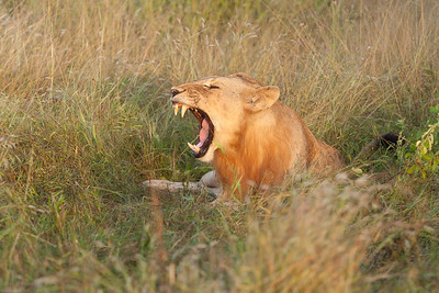 Kruger Park Safari 2009-04