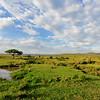 Masai Mara Scene