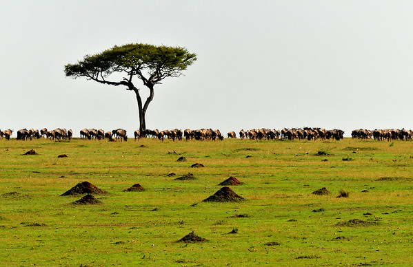 Masai landscape