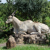 The centre is dedicated to the eland, a very frequent sight in the park.  This nice statue sits outside the center,