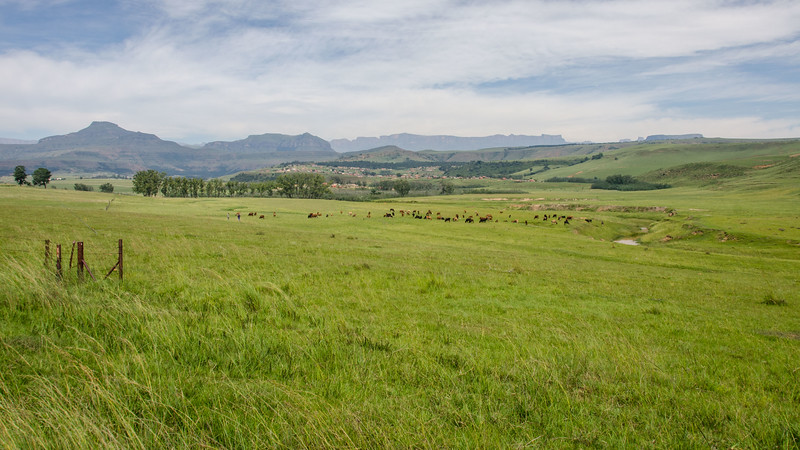 This is what grassy South Africa looks like in April; we found it quite charming as we drove through, heading for the Drakensberg area.