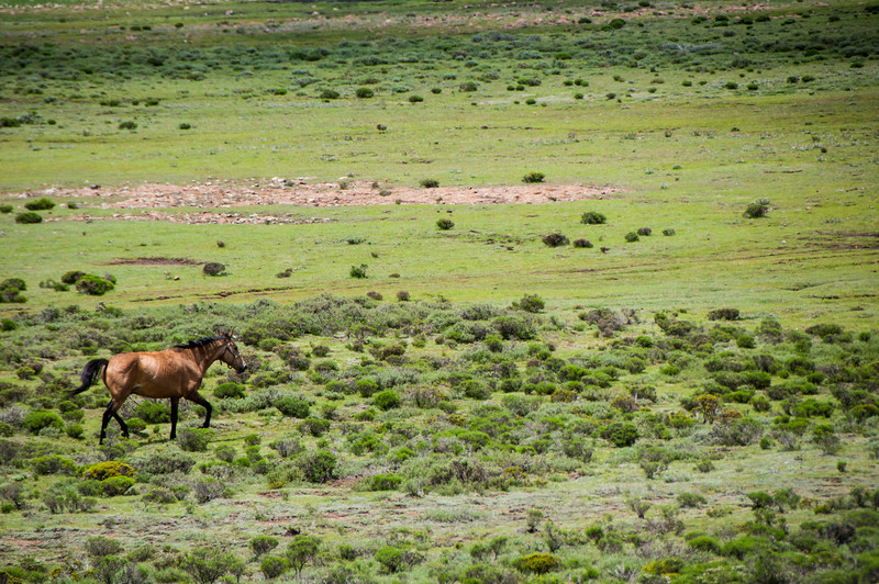 Horse running in the Sani Pass, Lesotho