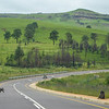 Baboons in the road near Underberg