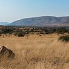 The wide open spaces of Pilanesberg are a great place to spot game,