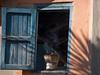 Old Town, Fianarantsoa.  With a couple of nights in attractive Fianarantsoa, I had a good chance to wander.