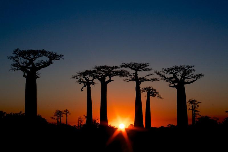 Avenue du Baobab, Madagascar