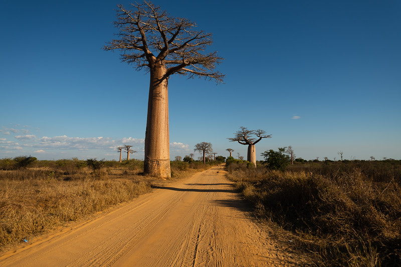 Towards Avenue of Baobabs