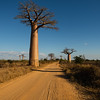 Towards Avenue of Baobabs