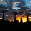 Avenue of Baobabs at sun set