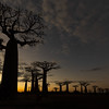 Avenue of Baobabs at dusk