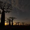 Avenue of Baobabs at dusk